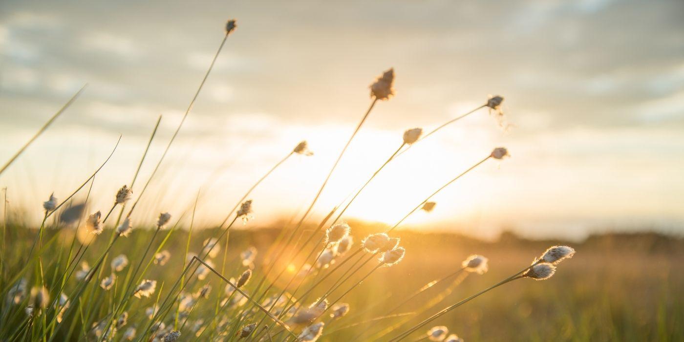 Wildblueten Meditation Maerz