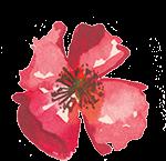 Wildblüten Abo Wilder Mohn