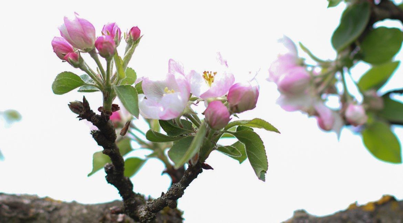 Frühling Bucket List
