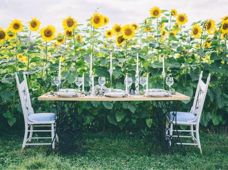 Sonnenblumen und Sukkulenten wundervolle Dekoration für ein Spätsommerfest mit DIY und Rezepten