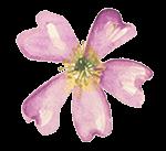Wildblüten Abo Wilde Malve