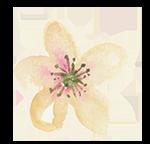 Wildblüten Abo Lichtblume